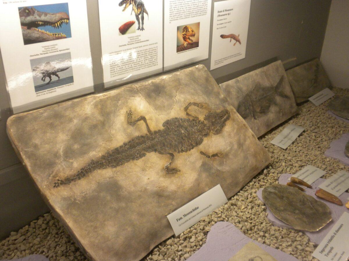 Museo Paleontologico di Magliano Vetere (apr2015)