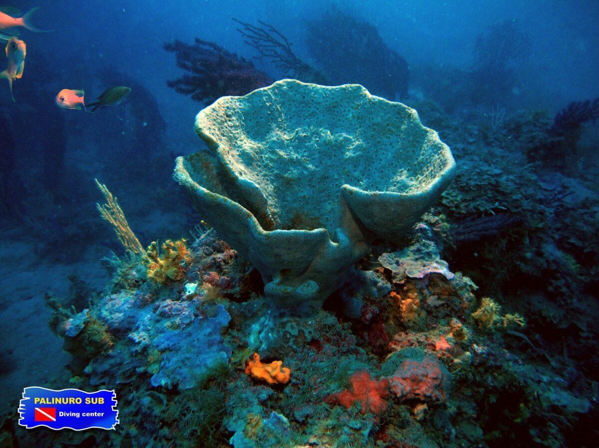 scuba diving palinuro cilento