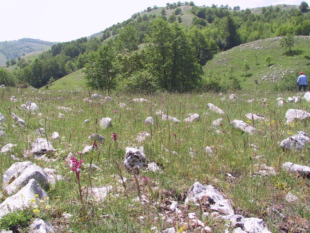 valle orchidee a sassano