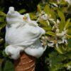 gelato artigianale tenuta chirico cilento